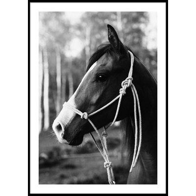 HORSE PORTRAIT - Plakat 50x70 cm