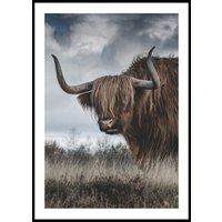 HIGHLAND CATTLE - Plakat 50x70 cm