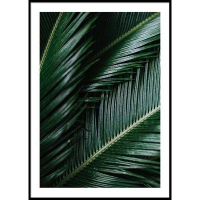 DARK PALM LEAVES - Plakat 50x70 cm