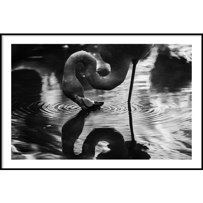 FLAMINGO REFLECTION - Plakat 50x70 cm